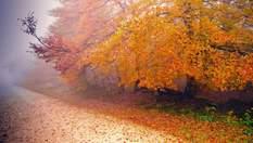 Прогноз погоди на 21 жовтня: в Україні буде холодно, подекуди пройдуть дощі