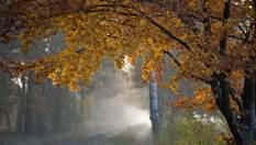 Прогноз погоди на 20 жовтня: до України повертається холодна осінь