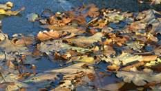 Прогноз погоди на 23 жовтня: в Україну йдуть дощі та справжній осінній холод
