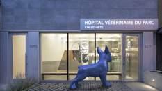 Заброшенная фотостудия стала современной ветеринарной клиникой: опыт Монреаля