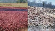 """Сморід, криваві ґрунти і ріки: що залишили по собі """"Гаврилівські курчата"""" і чому справу закрито"""