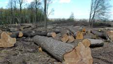 Розбірки Зеленського на Харківщині: розслідування журналістів 24 каналу про вирубку лісів