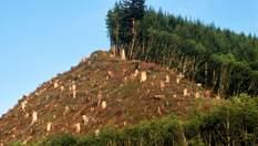 В Украине запустили онлайн-карту вырубки лесов