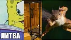 Самые смешные мемы недели Литволатвия, куница в Раде и белка-кунг фу