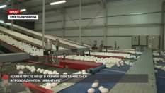 """Каждое третье яйцо в Украине поставляется агрохолдингом """"Авангард"""""""