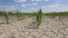 Україна встановила світовий земельний антирекорд