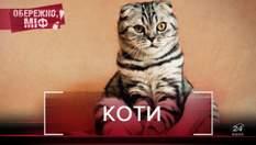 Зцілюють людей та мають 9 життів: найпоширеніші міфи про котів, які здивують