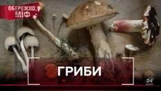 Алкоголь рятує від отруєння та смертельна небезпека: 10 міфів про гриби, у які ви точно вірили