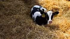 Прихований зв'язок між коровами та горілкою: що цікавого знайшли прикордонники
