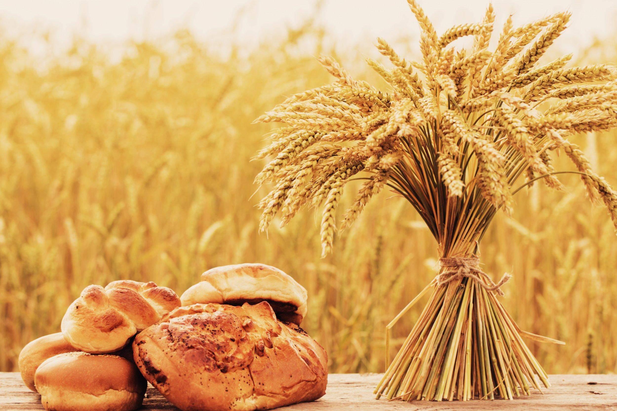 хліб знового врожаю