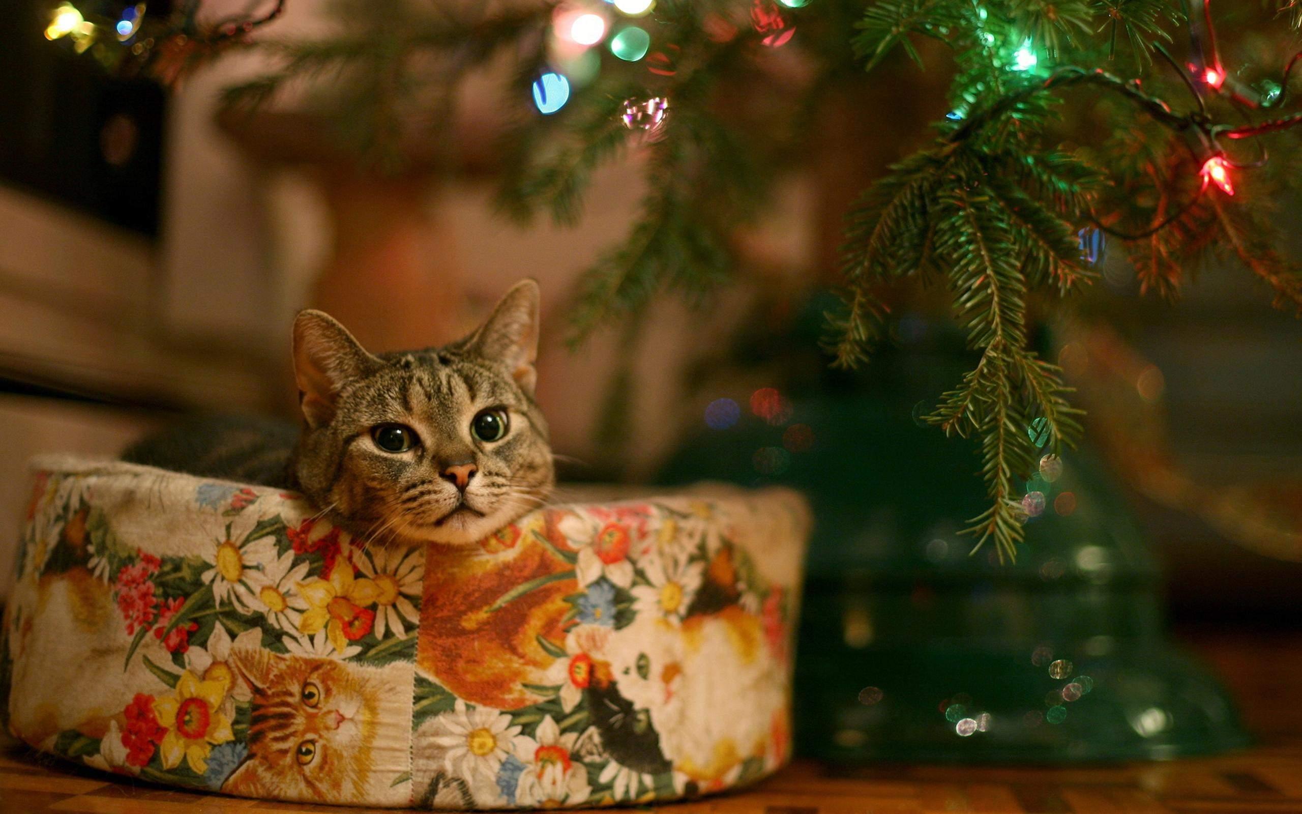 Сделайте для кота удобную лежанку