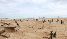 Нова пустеля для Путіна: як Росія втрачає південні степи Калмикії