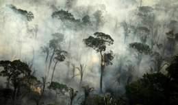 Катастрофа для лісів Амазонки: як Земля втрачає шанси на порятунок