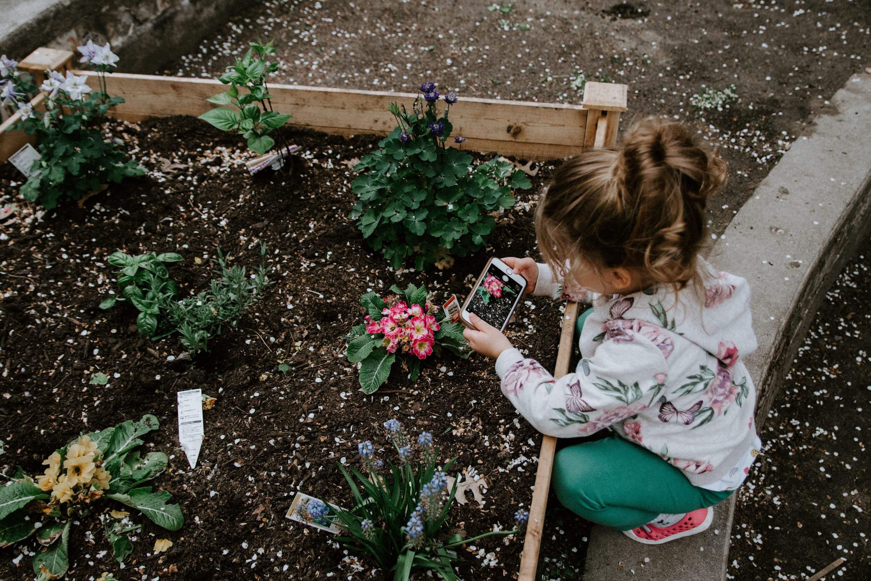 Підживлення квітів у саду
