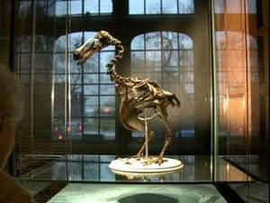 """У Лондоні триває виставка """"Відкриття: мистецтво, наука та дослідження"""""""