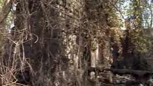 У Запоріжжі виявили колишній радянський концтабір