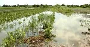Сильна злива у Херсоні залишила людей без врожаю