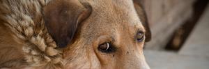 День бездомных животных: 5 причин взять любимца из приюта
