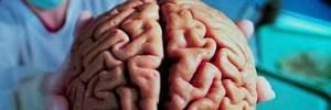 На межі фантастики: вчені змогли зберегти життя мозку поза тілом