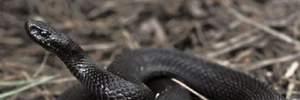 Во Львове от укуса змеи умер 4-летний ребенок