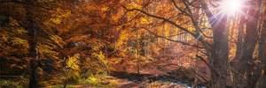 Прогноз погоди на 21 вересня: в Україні буде сонячно та по-літньому тепло