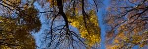 Прогноз погоды на 16 октября: осеннее лето не собирается отступать