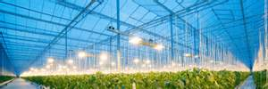 Intel та Microsoft зайнялися вирощуванням огірків