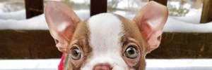 Які породи собак найпопулярніші в Instagram: цікаві факти