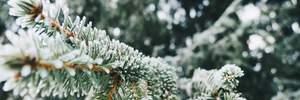 Прогноз погоди на 13 грудня: в Україну повертається зима, буде прохолодно і сніжитиме
