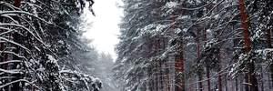 Прогноз погоды на 14 декабря: в Украине будет холодно и местами будет снежить