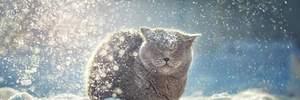 Прогноз погоды на 16 декабря: будет морозно, западные регионы притрусит снегом