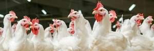 Україна почне постачати курятину в Сінгапур