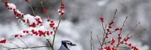 17 февраля – какой сегодня праздник и что нельзя делать в этот день