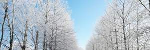 Прогноз погоди на 23 лютого: зима відновить свій статус, похолодання посилиться