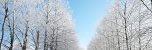 Прогноз погоды на 23 февраля: зима восстановит свой статус, похолодание усилится