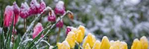 В Украину идут заморозки: где и когда ждать похолодания