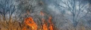 Часть России охватили масштабные пожары: жуткие фото и видео (18+)