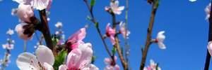 Прогноз погоди на 24 квітня: в Україні буде сонячно і спекотно
