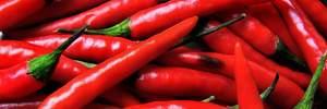 Гострі відчуття: які корисні властивості має червоний перець і чи шкодить він шлунку