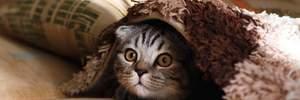 Створили вакцину для кішок, яка робить їх гіпоалергенними