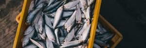 Когда рыба может быть вредной для вашего здоровья
