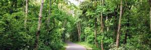 У лісосмузі під Варшавою знайшли тіло українця: чоловік зник ще в липні