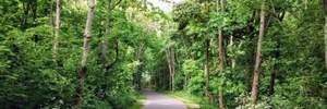 В лесополосе под Варшавой нашли тело украинца: мужчина исчез еще в июле