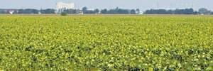 Ринок землі сільськогосподарського призначення: куди йтимуть гроші