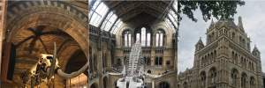 Музей природознавства у Лондоні звинуватили в сексизмі через велику кількість експонатів самців