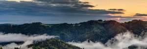 Зеленский подписал закон о запрете вырубки лесов Карпат: что изменится