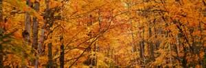 15 листопада – яке сьогодні свято і що не можна робити в цей день