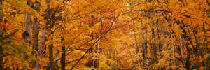 15 ноября – какой сегодня праздник и что нельзя делать в этот день