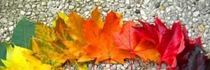 Прогноз погоди на 12 листопада: буде вітряно, але без дощу