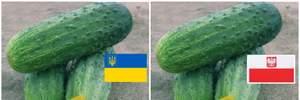 """Українські огірки """"під прикриттям"""" і штраф на мільярд: гучний скандал у мережі Biedronka"""
